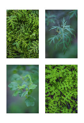 Collage - Sensitive To Green Art Print by Alexander Kunz
