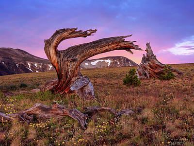 Coloful High Mountain Splendor Art Print by Leland D Howard