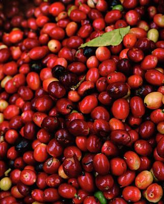 Photograph - Colombia, Narino, Fresh Coffee Beans by Livia Corona