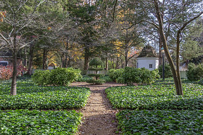Photograph - Colonial Topiary by Teresa Mucha