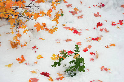 Photograph - Color And Snow 3 by Leland D Howard