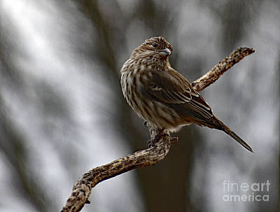 Door Locks And Handles - Color Coordinated Female House Finch by Cindy Treger