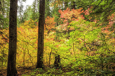 Photograph - Color In The Woods by Belinda Greb