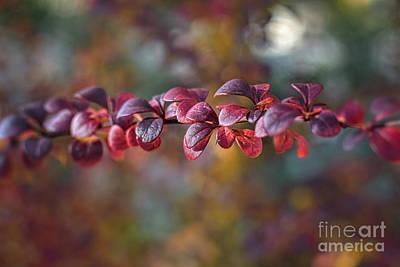 Photograph - Color Me Autumn by Susan Warren