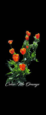 Digital Art - Color Me Orange by Becky Bunting