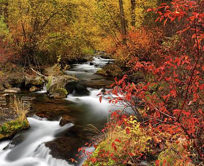 Photograph - Color Of Autumn by Leland D Howard