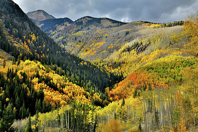 Photograph - Color Spotlights Along Highway 145 In Co by Ray Mathis