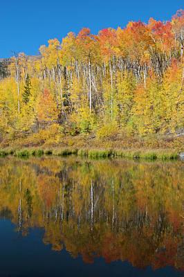 Photograph - Colorado Autumn Aspen Forest Reflection by Cascade Colors