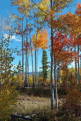 Photograph - Colorado Autumn Aspen With Morning Shadows by Cascade Colors