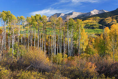 Photograph - Colorado Autumn Aspens by John De Bord
