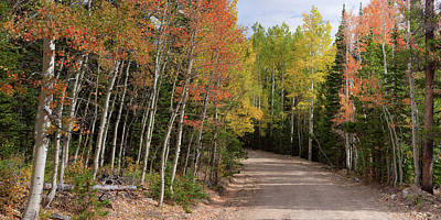 Photograph - Colorado Autumn Reds Back-country Road Panoramic View by James BO Insogna