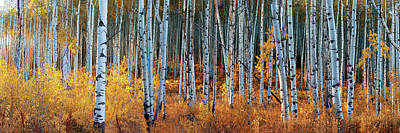 Photograph - Colorado Autumn Wonder Panorama by OLena Art Brand