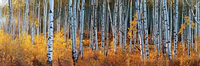 Photograph - Colorado Autumn Wonder Panorama by OLena Art Brand