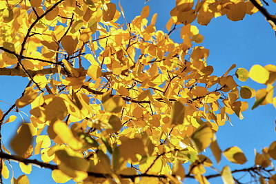 Photograph - Colorado Fall Foliage And Blue Sky by Tony Hake