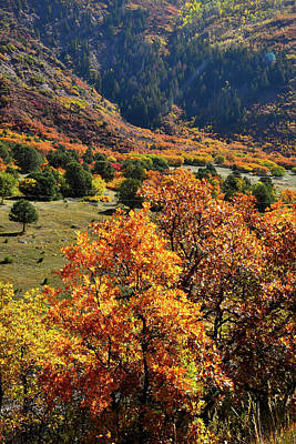 Photograph - Colorado Highway 133 Fall Colors by Ray Mathis