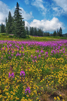 Photograph - Colorado Purple Lupine Near Steamboat Springs by Dave Dilli