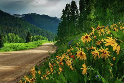 Photograph - Colorado Wildflowers by John De Bord