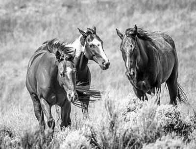 Photograph - Colorado's Finest  by Kevin Dietrich