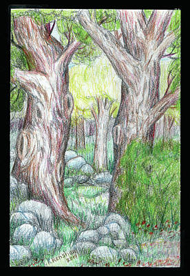 Drawing - Colorfl Trees by Ruth Renshaw