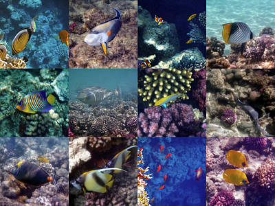 Unicorn Dust - Colorful And Exotic Red Sea Underwater Collage by Johanna Hurmerinta