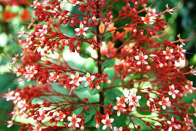 Photograph - Colorful Arrangement by Eric Christopher Jackson