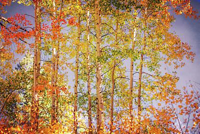 Photograph - Colorful Aspens by Elena E Giorgi