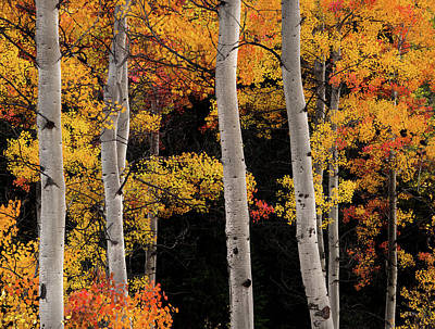 Photograph - Colorful Autumn Contrast by Leland D Howard