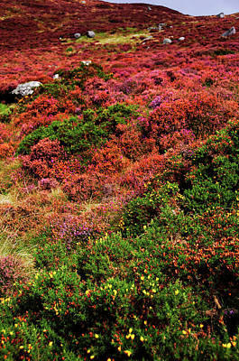 Photograph - Colorful Autumn In Wicklow.  Red Hills by Jenny Rainbow