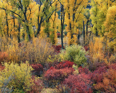 Photograph - Colorful Autumn by Leland D Howard