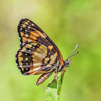 Photograph - Colorful Butterfly by Anthony Dezenzio