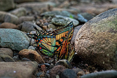 Photograph - Colorful Butterfly  Paintography by Dan Friend
