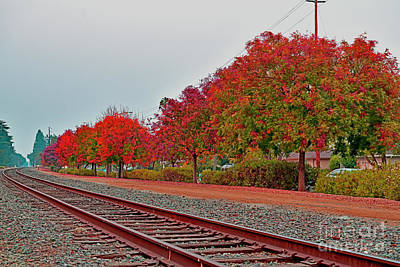 Photograph - Colorful Fall Along The Railroad, Cupertino by Bipul Haldar