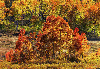 Photograph - Colorful Layers by Leland D Howard