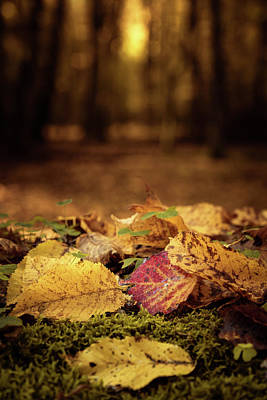 Photograph - Colorful leaves on the tree in autumn by Robert Pastryk