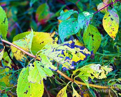 Photograph - Colorful Leaves by Tatiana Travelways