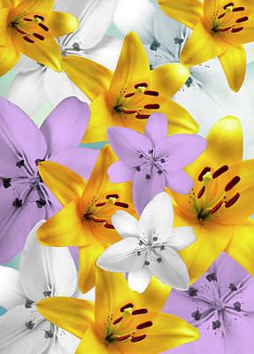 Photograph - Colorful Lilies Photoart by Johanna Hurmerinta