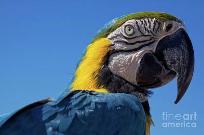 Photograph - Colorful Parrot's Head by Tatiana Travelways