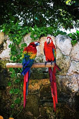 Colorful Parrots Art Print