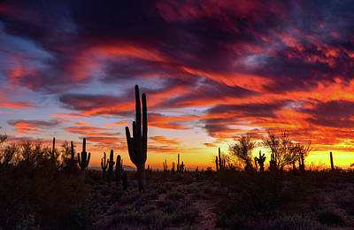 Photograph - Colorful Saguaro Sunset Skies  by Saija Lehtonen