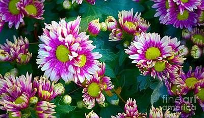 Digital Art - Colorful Spring Daisy Blooms  by Ian Gledhill