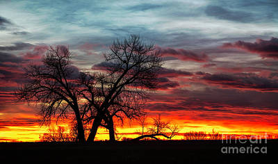 Photograph - Colorful Sunrise With  Silhouette Trees by Ronda Kimbrow