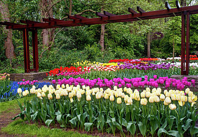 Photograph - Colorful Tulips Mix Display In Keukenhof by Jenny Rainbow