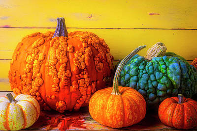 Photograph - Colorful Warty Pumpkin Still Life by Garry Gay