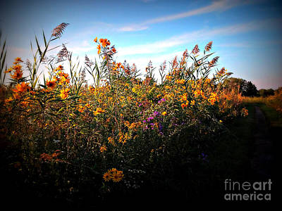 Frank J Casella Royalty-Free and Rights-Managed Images - Colorful Wild Flowers Under the Blue Sky by Frank J Casella
