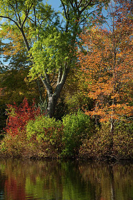 Photograph - Colors Of Fall by Karol Livote