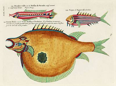 Surrealism Royalty-Free and Rights-Managed Images - Colourful and surreal illustrations of fishes found in Moluccas  Indonesia and the East Indies by L by Celestial Images
