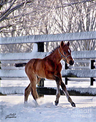 Digital Art - Colt Frolicking In The Snow by CAC Graphics