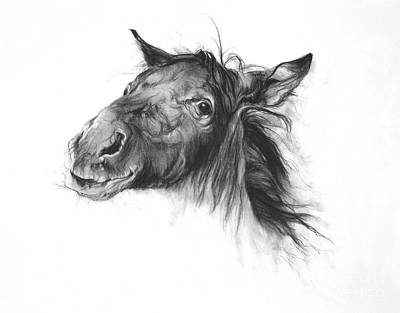 Drawing - Colt by Odile Kidd
