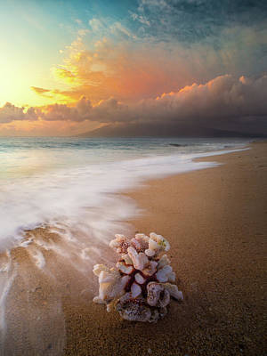 Photograph - Come Back To The Sea / Maui, Hawaii  by Nicholas Parker