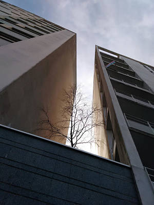 Wall Art - Photograph - Comme Un Arbre Dans La Ville by Christine AVIGNON